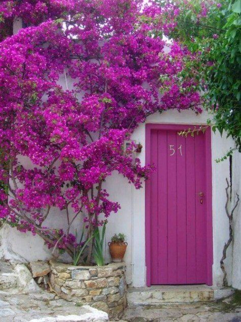 Radiant orchid door