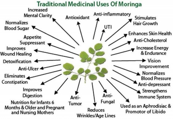 Moringa Oleifera Benefits