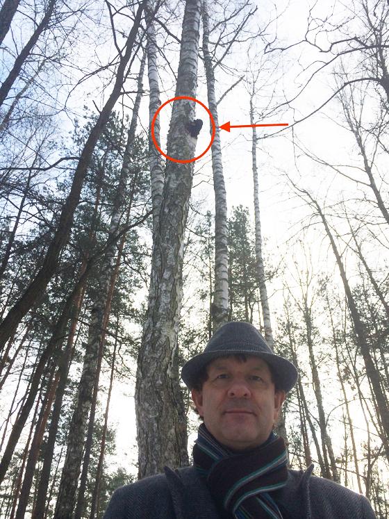 Jan Cisek and his first chaga mushroom found in Poland