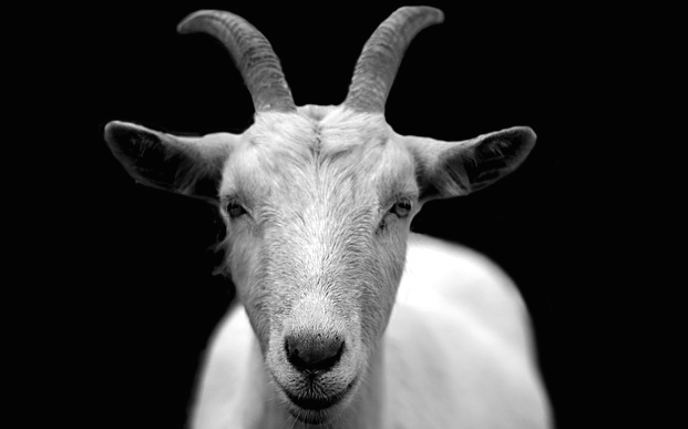 2015 - The Year of the Wood Goat (Sheep or Ram) starts on 19 February 2015