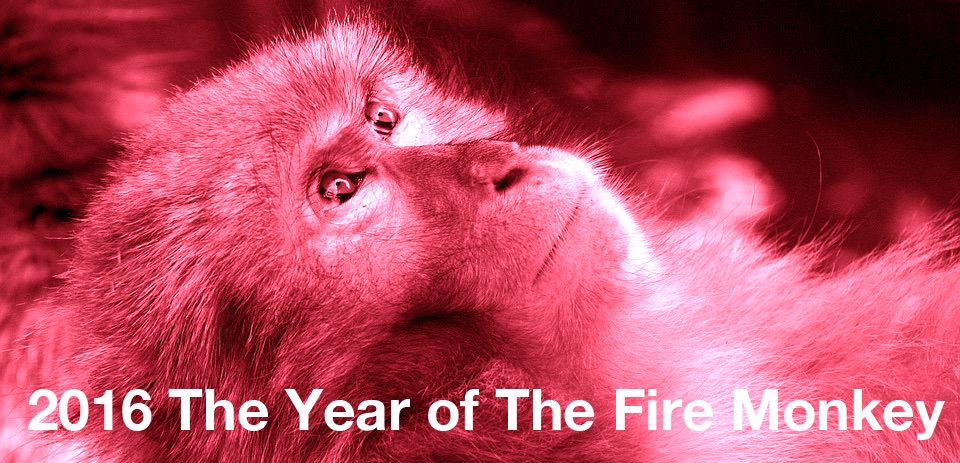 2016 the year of the fire monkey