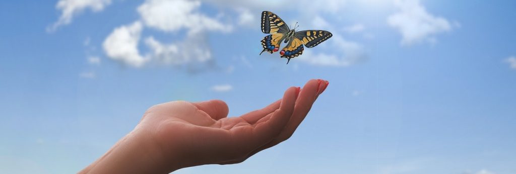 Feng shui stories- butterfly