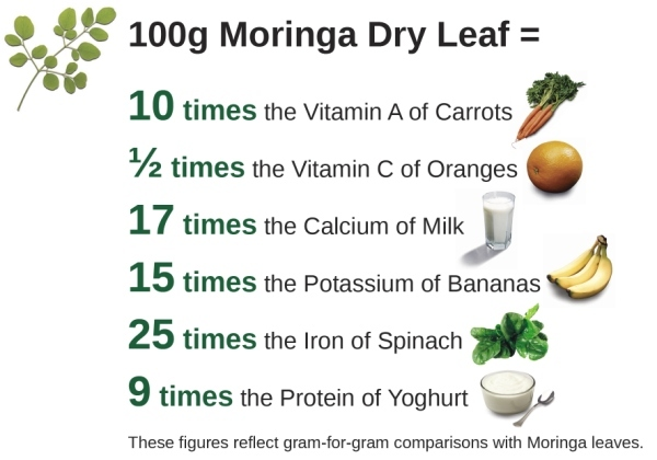 Moringa Tree Leaf Benefits